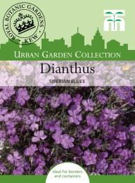 Dianthus Siberian Blues