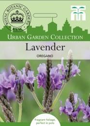 Lavender multifida Origano