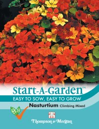 Nasturtium Climbing Mix