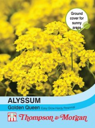 Alyssum Saxatile Golden Queen