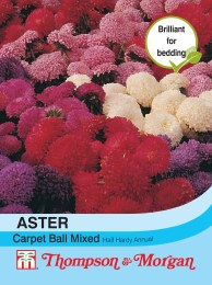Aster Carpet Ball Mixed