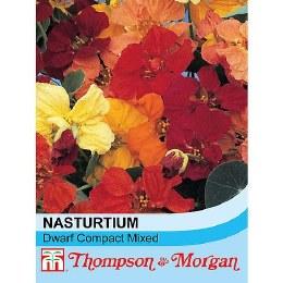 Nasturtium Dwarf Compact Mix