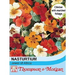 Nasturtium Jewel of Africa