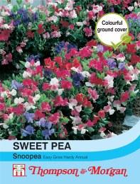 Sweet Pea Snoopea