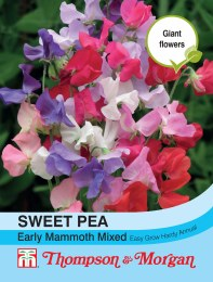 Sweet Pea Early Mammoth Mix