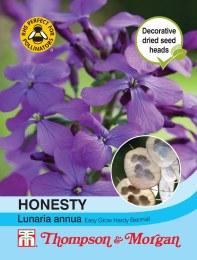 Honesty Lunaria Annua