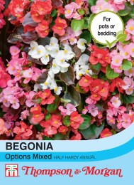 Begonia semperflorens Options