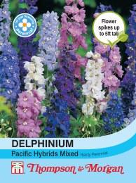 Delphinium Pacific Hybrid Mix