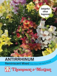 Antirrhinum Reminiscent