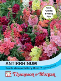 Antirrhinum Double Madam Butte