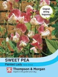 Sweet Pea Painted Lady