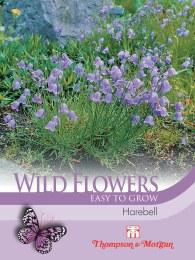 Wildflower Harebell