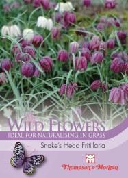 Bee Friendly - Wild Flower Snakes Head Fritil