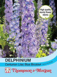 Delphinium Centurion Lilac Hybrid