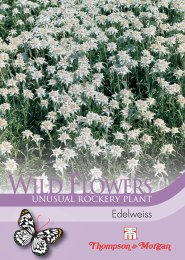 Wild Flower Edelweiss