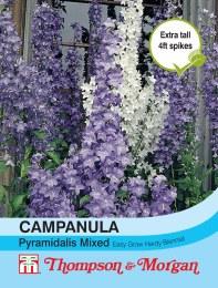 Campanula pyramidalis Mix