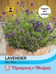 Lavender Mini Blue