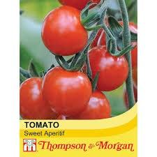 Tomato Sweet Aperitif