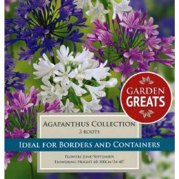 Grarden Greats  Agapanthus Collection