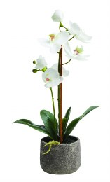 Artificial Orchid Plant Medium