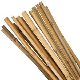Bamboo Canes 5ft Pack of 10