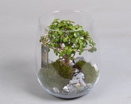 Bonsai Arrangement in Glass Pot 22cm