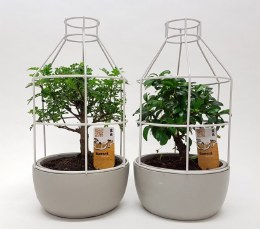 Bonsai mix in 16cm Ceramic/ Metal Birdcage