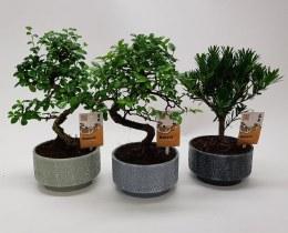 Bonsai mix 15cm Ceramic Pot