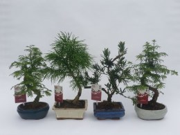 Bonsai outdoor mix  15 cm