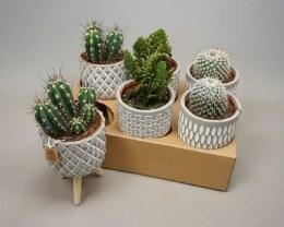 Cactus Mix in Concrete Pot Smooth on 3 Legs