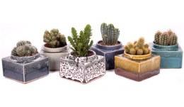 Cactus mix 12Cm Square