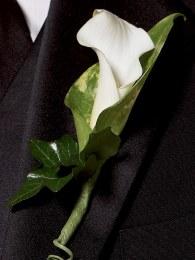 Calla Lily Buttonhole - Chic White