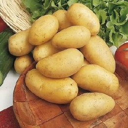 Charlotte Potatoes 9 pack - Second Early