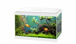 Ciano Aqua 20 White With LED Lights & Filter