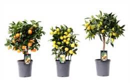 Citrus Mix P15