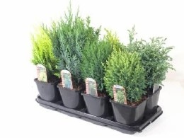 Conifer Mix 2 Litre