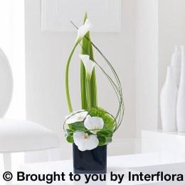 Contemporay Calla Lily and Orchid Sympathy Arrangement