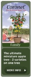 Apple Tree Family Two Varieties - Self Fertile