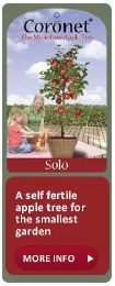 Apple Coronet Solo Variety - Self Fertile