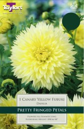 Dahlia 'Canary Yellow' x1