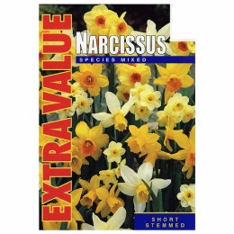 Daffodil - Narcissus Species Mix 25 Pack