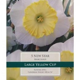 Daffodil New Star