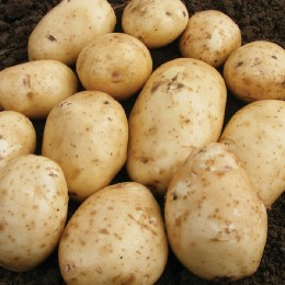Epicure Seed Potatoes 2kg - First Early