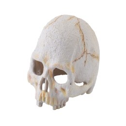 Exo Terra Primate Skull Small