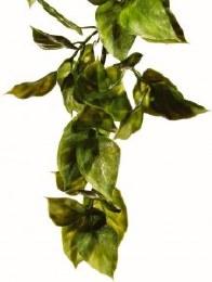 Exo Terra Plant Small