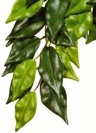 Exo Terra Silk Terrarium Ficus Plant