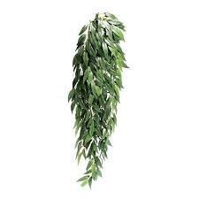 Exo Terra Silk Rucus Plant