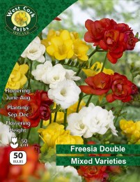 Freesia Double Flower Mixed 50 Bulbs