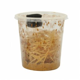 Fruit Fly Large Bulk Pack