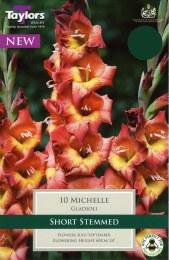 Gladioli Michelle
